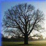 Дерево логіки: як вирішувати нагальні проблеми по науці